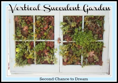 Second Chance to Dream: Vertical Succulent Garden